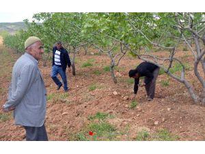 Siirtli Çiftçiler Kabusu Yaşadı