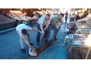 Mersin'de Balıkçıların Ağına Köpek Balığı Takıldı