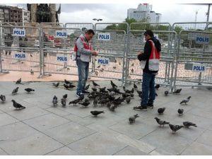 Taksim Meydanı Güvercinlere Kaldı