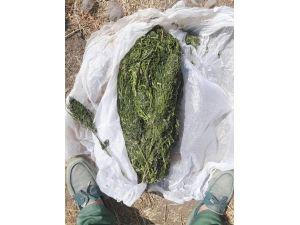 Aliağa'da 1 kilo 20 gram esrar ele geçirildi