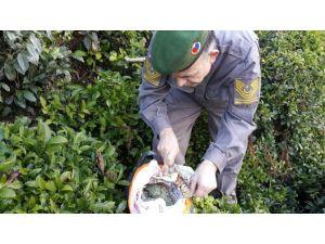 Rize'de çay bahçesinde 500 gram esrar maddesi ele geçirildi