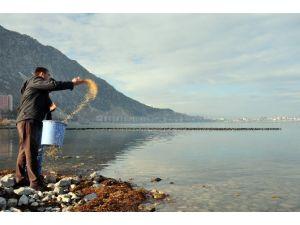 Belediye göl kıyısına kuşlar için yem bıraktı