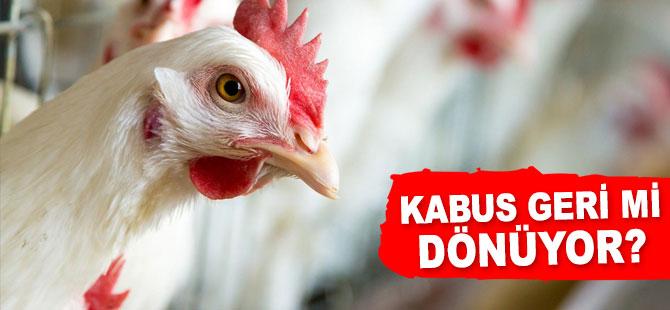 Reşadiye'de Kuş Gribi Rastlanan Köyde Tavuklar İtlaf Edildi