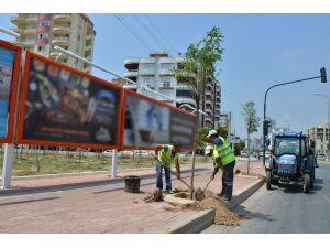 Mersin'de kesilen ağaçların yerine yenileri dikildi
