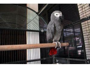 Papağan sayesinde hırsızlık çetesi çökertildi