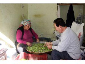 Kilis'te Sofralık Zeytin Piyasada