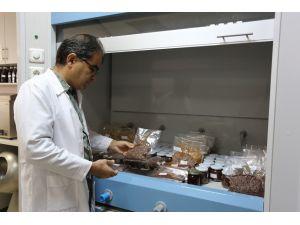 Kara isotta kanserojen madde tespit edildi