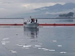 Urla'da denize yakıt sızdı, balıklar telef oldu