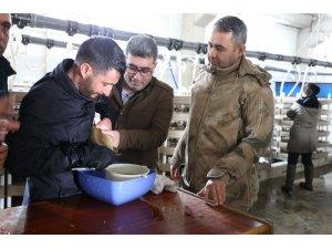 Varto Kaymakamı Çetin, balık sağımı yaptı