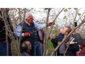 Fındıkta bilinçli budamanın meyveleri bu yıl alınacak