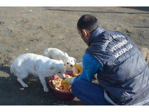 Doğubayazıt'ta bayat ekmekler sokak hayvanlarına veriliyor
