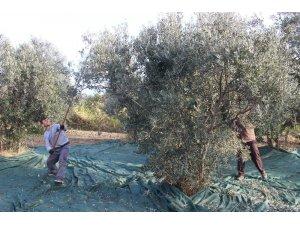 Edremit zeytin ve zeytinyağı çalıştayına ev sahipliği yapacak