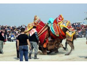 Salihli'de geleneksel deve güreşi iptal