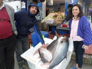 """Mudanya'da balıkçıların ağına 1 metrelik """"akya"""" takıldı"""