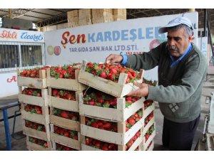 Aydın'da yaz çileği hasadı başladı