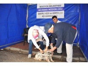 Bozüyük'te köpeklere ücretsiz kuduz aşısı kampanyası