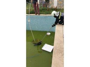 İtfaiye havuza düşen kedi için seferber oldu