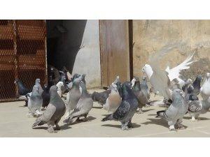 Tarihi kentin semalarını güvercinler renklendirecek