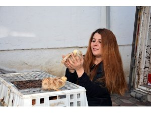 Kabadüz Ziraat Odası çiftçilere tavuk dağıttı