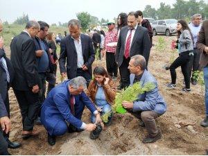 Erdemli'de şehitler anısına fidan dikildi