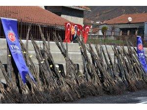 TİKA'dan Makedonya'da ceviz yetiştiriciliğine destek