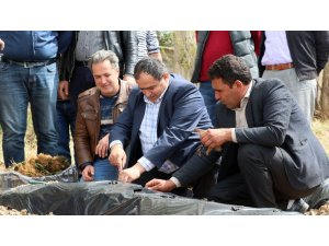 Aksaray'da çilek, üreticinin yüzünü güldürüyor
