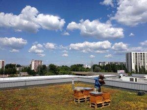 Polonyalı ekonomist plazaların çatısında arıcılık yapıyor