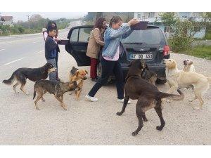 Öğrencileri ile sokak köpeklerine sahip çıktı