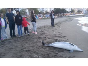 """Yılmaz: """"Yunus ölümleri balıkçı ağlarından kaynaklanıyor"""""""