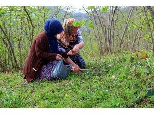 Köylülerin yaz hazırlıkları