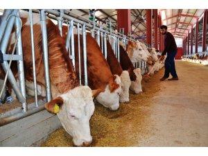 Devlet desteğiyle kurduğu tesiste günde 3 ton süt üretiyor