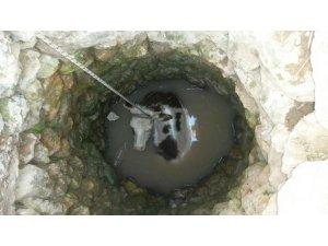 Su kuyusuna düşen inek kurtarıldı