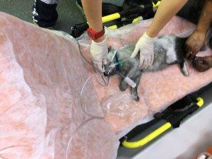 Yangından kurtarılan kedi, kalp masajıyla hayata tutundu