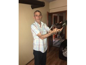 Ormanda bulduğu yaralı kuşu evinde tedavi etti