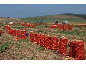 Amik Ovası'nda soğan hasadı
