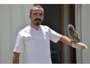 Yüksekova'da bulunan iki yavru baykuş tedavi altına alındı