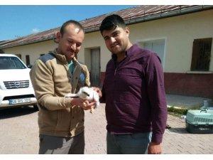 Sivas'ta kaçakçılardan kurtarılan yavru kartal Şanlıurfa'da koruma altına alındı