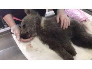 Kars'ta yavru ayı biberonla besleniyor