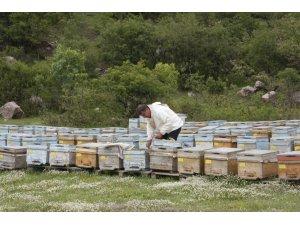 Beytüşşebaplı arıcılar Kato'ya çıkmaya başladı
