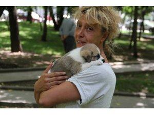Otomobille köpeği ezip öldüren şahıs gözaltına alındı