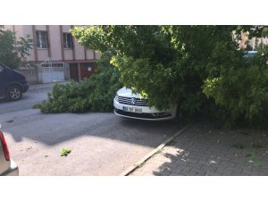 Ağacın dalları lüks aracın üzerine devrildi