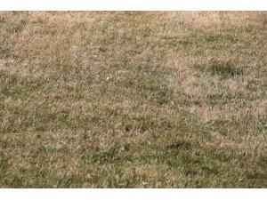Elazığspor'da tesislerin çimleri kurudu