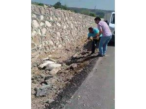 Yaralı pelikana şefkat eli