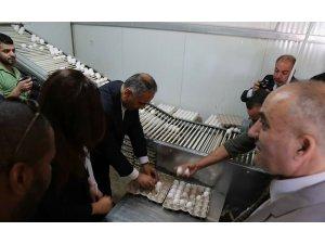 TİKA'dan Filistin'e yumurta tavukçuluğu tesisi
