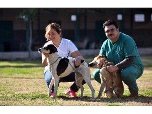 Kepez Belediyesi sokak hayvanlarına sahip çıkıyor