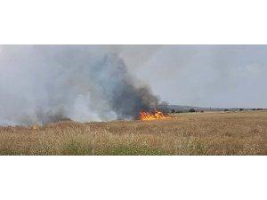 Tarlada çıkan yangında tonlarca buğday kül oldu