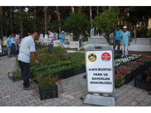 Alanya Belediyesi, 21 mezarlıkta 42 bin çiçek dağıtacak