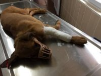 Kazada yaralanan köpeğe müdahale edildi