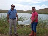 Sungurlu'da gölete 10 bin sazan yavrusu bırakıldı