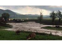 Köy içerisinden geçen dere taştı ekili araziler su altında kaldı